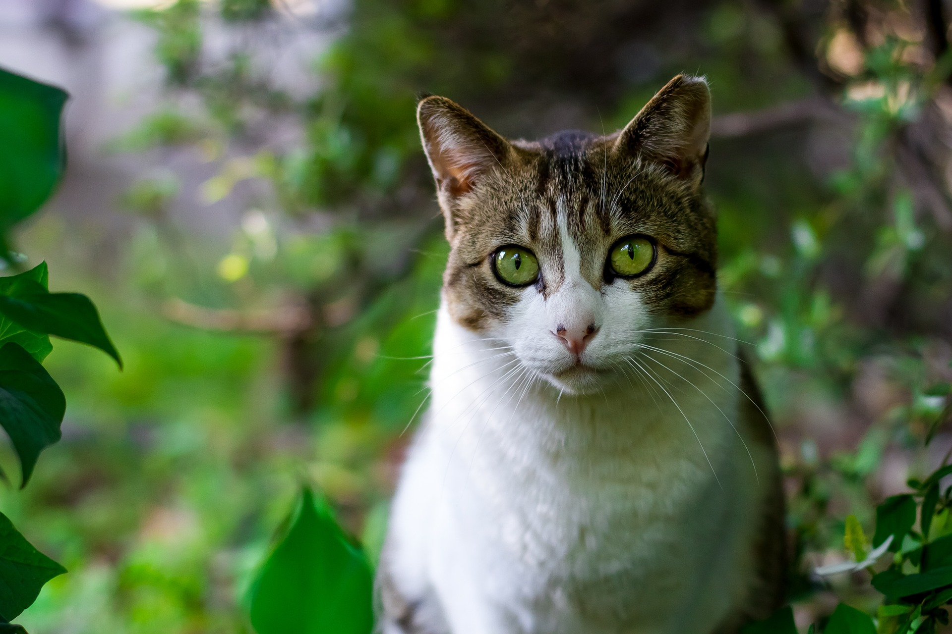 Cat food & Accessories