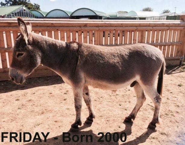 Donkeys - Pets World Kent