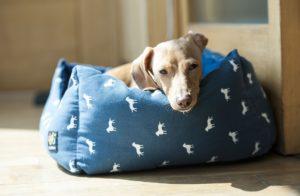 dog beds