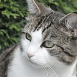 cat-3071997_1920