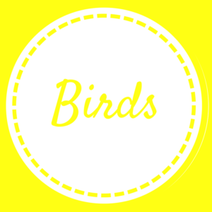 Birds - Home Page - May 2018 (1)