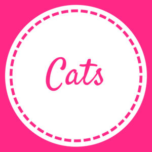 Cats - Home Page - May 2018 (2)